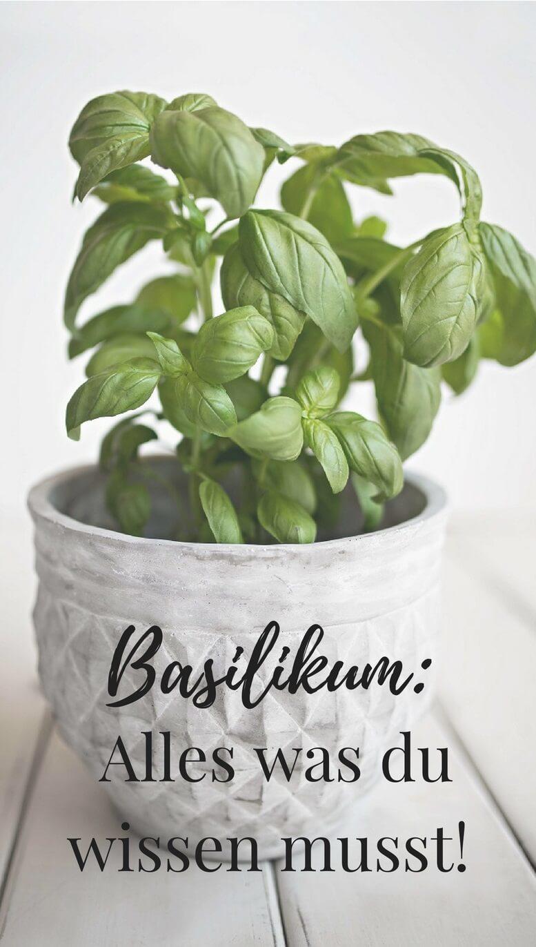 Verwendung und Anwendung von Basilikum