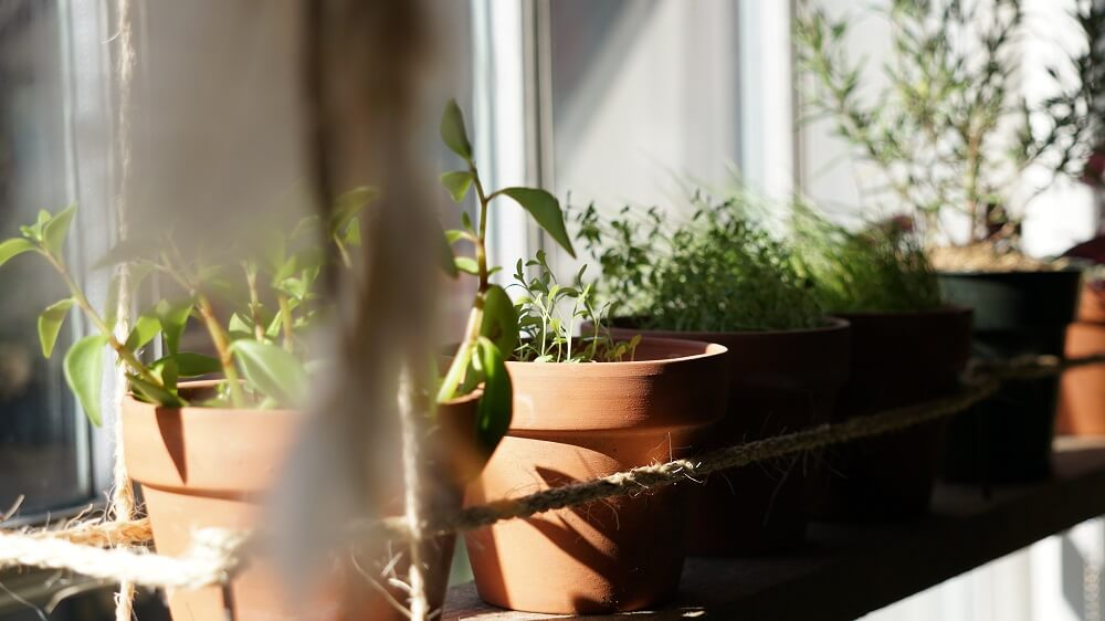 Wie du Kräuter im Haus anbauen kannst