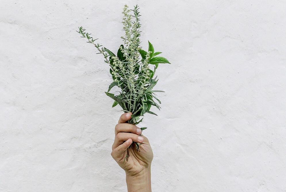 Kräuter, ein Geschenk der Natur