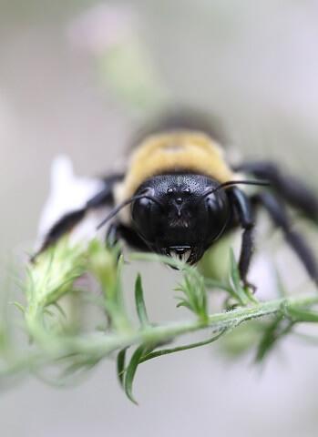 Kräuter spenden wichtigen Pollen und Nektar
