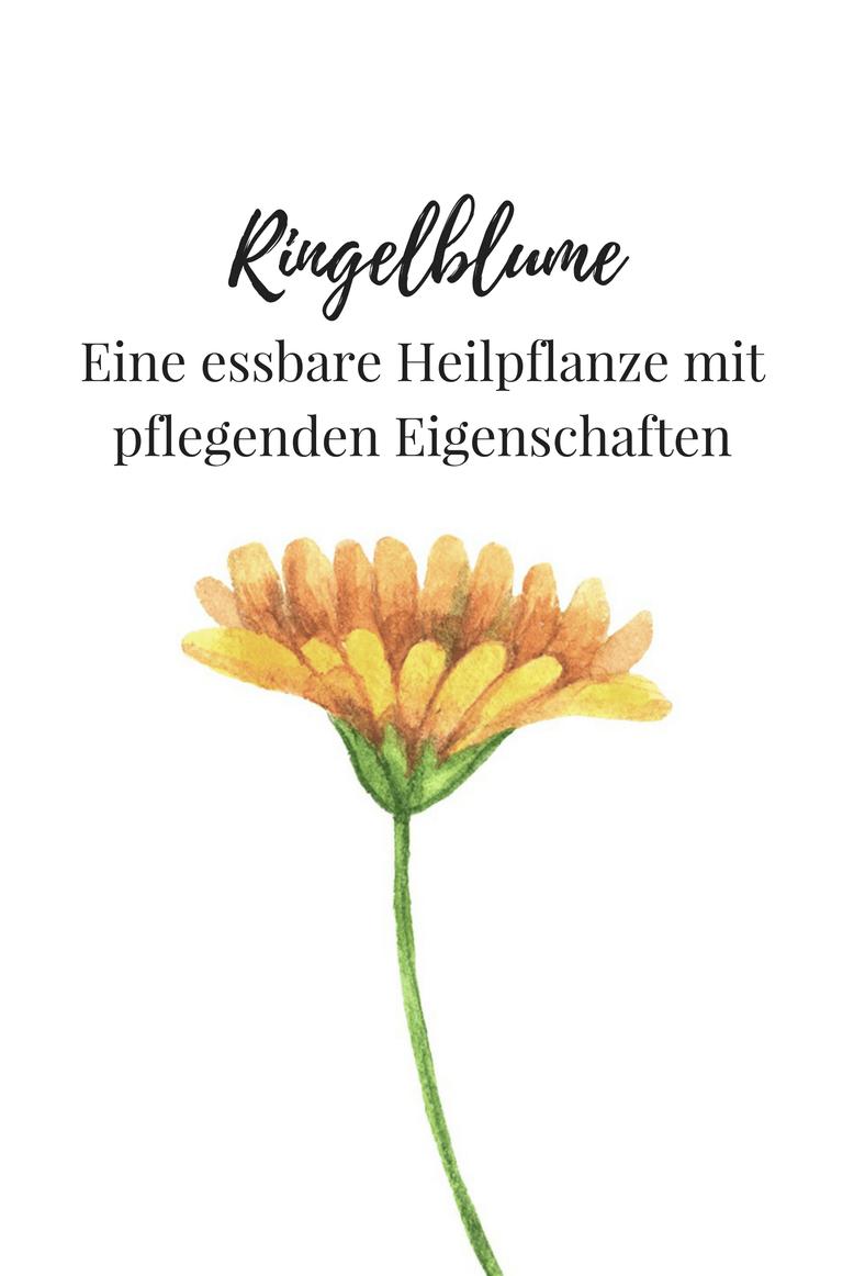 Ringelblume, ein Kraut mit pflegenden Eigenschaften